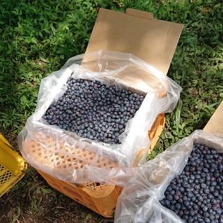 冷凍ブルーベリー2キロ
