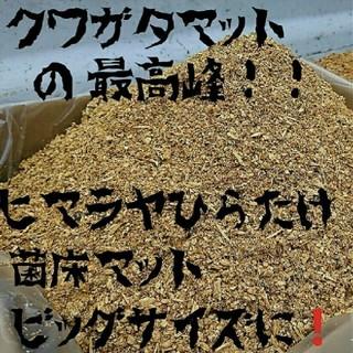 送料無料!40リットル 幼虫が巨大化!ヒマラヤひらたけ菌床クワガタマット