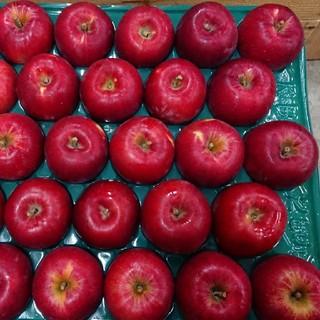 【家庭用】減農薬栽培りんご 青森県産紅玉約5kg28玉