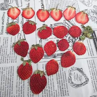 押しフルーツイチゴ②いちご苺ドライフルーツ花材(ドライフラワー)