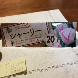 ☆☆臨時出品☆☆ チューリップ球根 シャーリー 6球(その他)