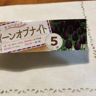 ☆☆臨時出品☆☆ チューリップ球根 クイーンオブナイト 3球(その他)