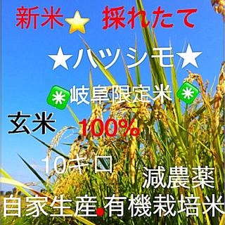 ✳️令和元年✳️10月20日稲刈り分 採れたて❗️新米ハツシモ玄米10キロ。