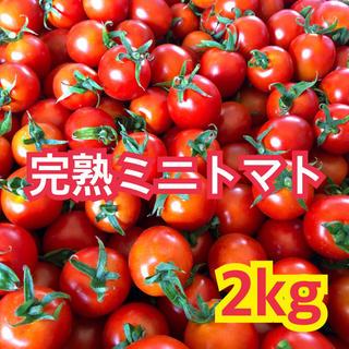 宮崎県産 完熟ミニトマト 2kg