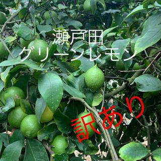 瀬戸田 グリーンレモン   訳あり 2.5キロ(フルーツ)
