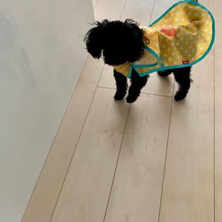 アイリスオーヤマ(アイリスオーヤマ)のレインコート 犬 MD(その他)