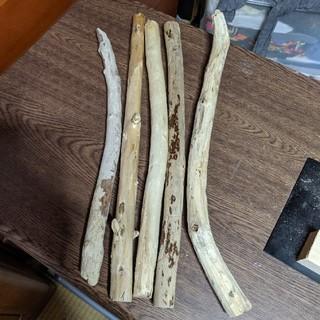 天然流木 5 本  【24】(各種パーツ)