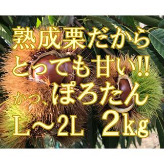 高級希少品種 熟成 栗 ぽろたん! 2Lサイズ 2kg