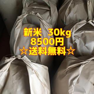 新米30キロ(米/穀物)