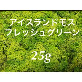 アイスランドモス フレッシュグリーン25g(ドライフラワー)