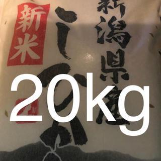 米 20kg 新米 01年産 新潟県産 コシヒカリ 精米年月日19.10.3(米/穀物)