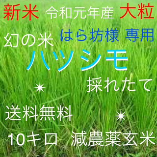 ★令和元年産新米ハツシモ減農薬玄米10キロ✴️全国送料無料✴️