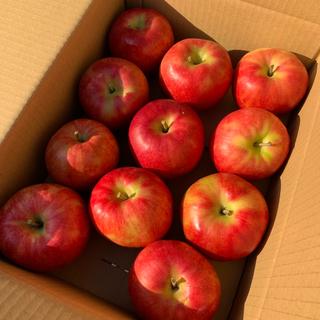 リンゴ 果物 青森県 サンジョナ(フルーツ)