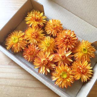 花材セット ドライフラワー ヘリクリサム オレンジ 12個 ハーバリウムなどに♪(ドライフラワー)
