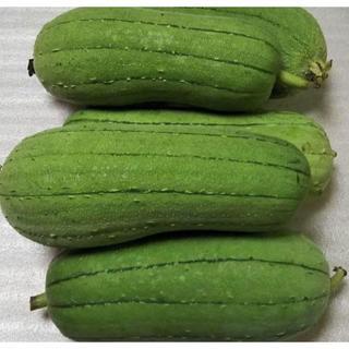 『ヘチマ2キロ(生食可能品種)』アジア 沖縄食材