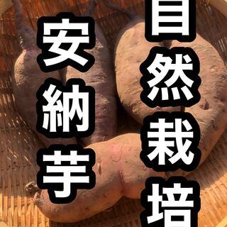 自然の恵み 安納芋 自然栽培 岐阜県産 (野菜)