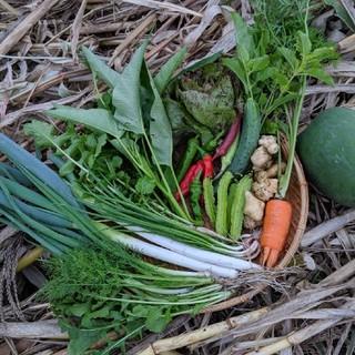 無農薬野菜 (野菜)