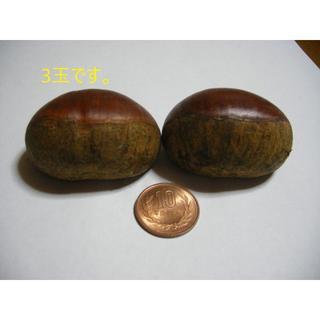 信州 小布施栗 3L玉1㌔ 3300円 ラ3(フルーツ)