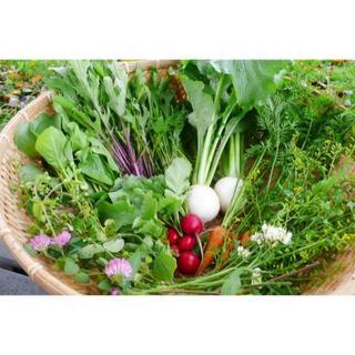 なすび母さん様専用 無農薬野菜 秋野菜4種類セット 【発送地区限定】 (野菜)