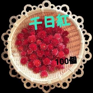 千日紅 100個 赤 ストロベリーフィールズ(ドライフラワー)