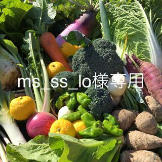 野菜BOX  Mサイズ  ms_ss_lo様専用(野菜)