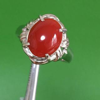 Pt900 高知産 赤珊瑚 指輪 リング (リング(指輪))