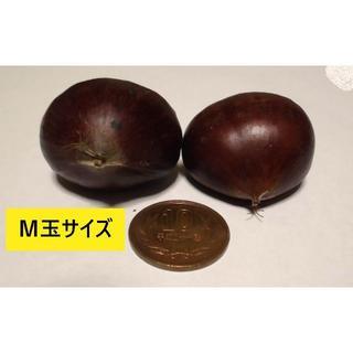 信州 小布施栗 M玉1㌔ 1800円 ラ2(フルーツ)