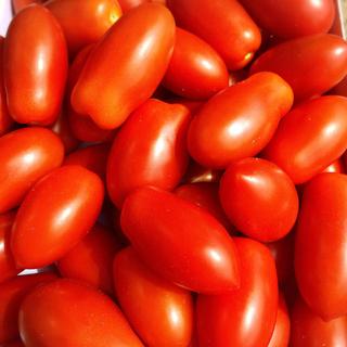 ミニトマトあいこ1キロ※只今増量中(野菜)