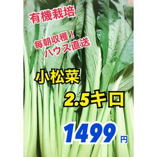 【朝採り野菜】減農栽培 新鮮小松菜2.5キロ!ハウス直送でコマツナお届けします(野菜)