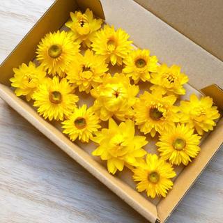 花材セット ドライフラワー ヘリクリサム 黄色 イエロー 15個 ハーバリウムに(ドライフラワー)