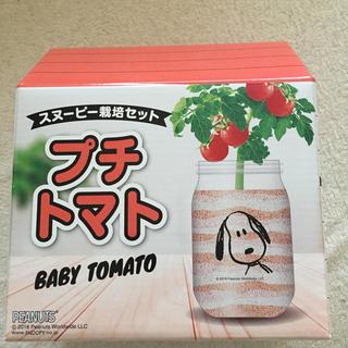 ピーナッツ(PEANUTS)のスヌーピー   栽培セット プチトマト(その他)