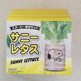 ピーナッツ(PEANUTS)のスヌーピー   栽培セット サニーレタス(その他)