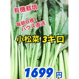 【朝採り野菜】減農栽培 新鮮小松菜3キロ!ハウス直送でコマツナお届けします(野菜)