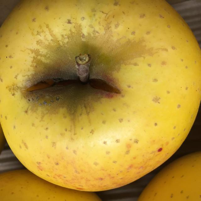 【送料込】訳あり葉とらずりんご シナノゴールド 約10kg 24個入り 食品/飲料/酒の食品(フルーツ)の商品写真