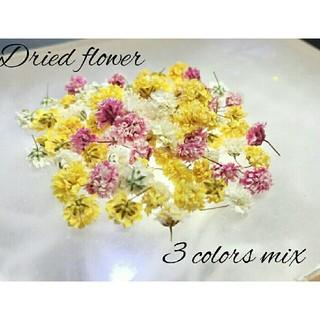 かすみ草ドライフラワー 3色mix 白、黄、桜色(ドライフラワー)