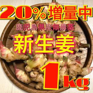 鹿児島県産 無農薬 新生姜1,2kg(野菜)