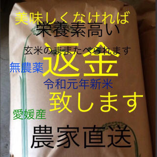 かずちゃん米 無農薬 特選新米純こしひかり10㎏ 玄米(米/穀物)