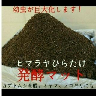 送料無料!80リットル カブトムシ幼虫の餌 ヒマラヤひらたけ発酵マット 巨大化!