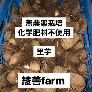 里芋 農薬・肥料不使用 1.2キロ(野菜)