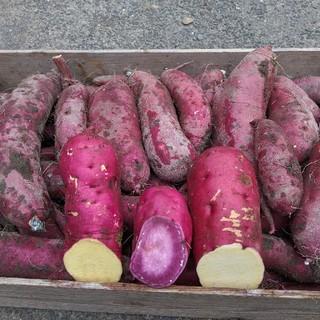 岡山県産  訳あり  家庭用  さつまいも  ミックス  16キロ以上  無農薬(野菜)