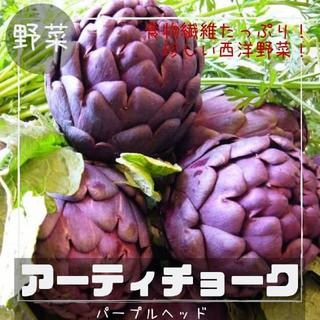 野菜【アーティチョーク】パープルヘッド 種子4粒(その他)