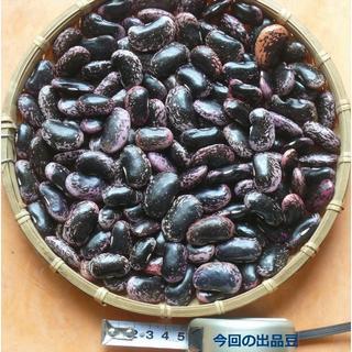 本年度北海道寒冷地産紫花豆1kg(野菜)
