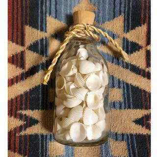 ロンハーマン(Ron Herman)の貝殻 インテリア小物 インテリア雑貨 シェル 瓶詰(インテリア雑貨)