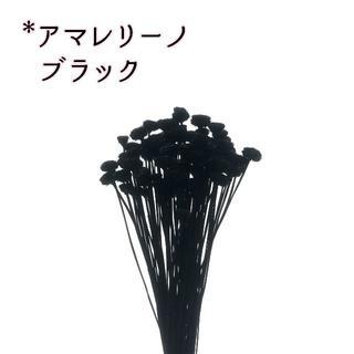 アマレリーノ ブラック 10本(ドライフラワー)