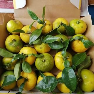 毎日、収穫‼️ 茨城県産‼️完全無農薬のゆず約1.5kg‼️(フルーツ)