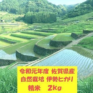無農薬!自然栽培!農家直送!令和元年度佐賀県産!「伊勢ヒカリ」精米2kg(米/穀物)