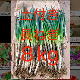 土付き長ネギ 山形県産 S〜LLサイズ 8キロ 白ネギ(野菜)