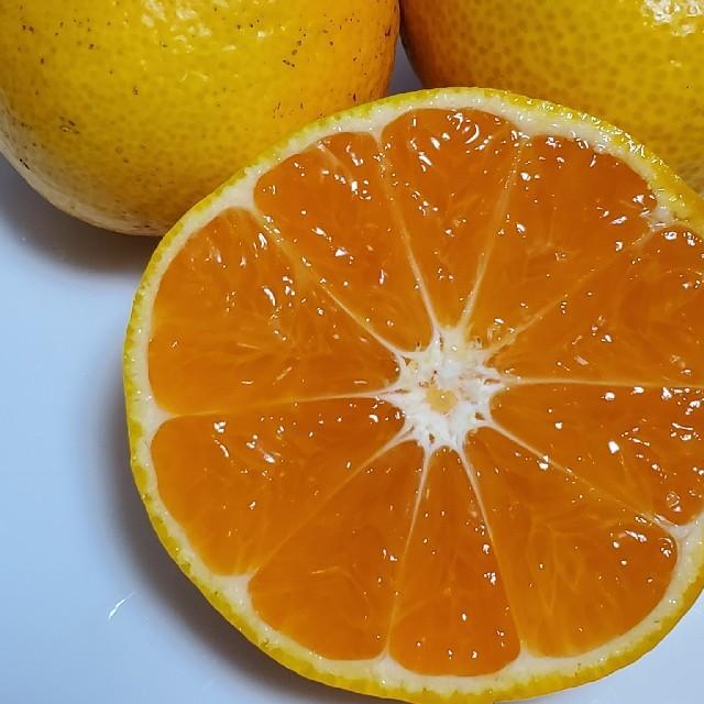 有田みかん 食品/飲料/酒の食品(フルーツ)の商品写真