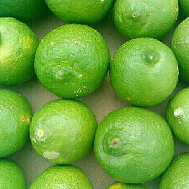 レモン 無農薬 国産 グリーンレモン 約1kg 食品/飲料/酒の食品(フルーツ)の商品写真