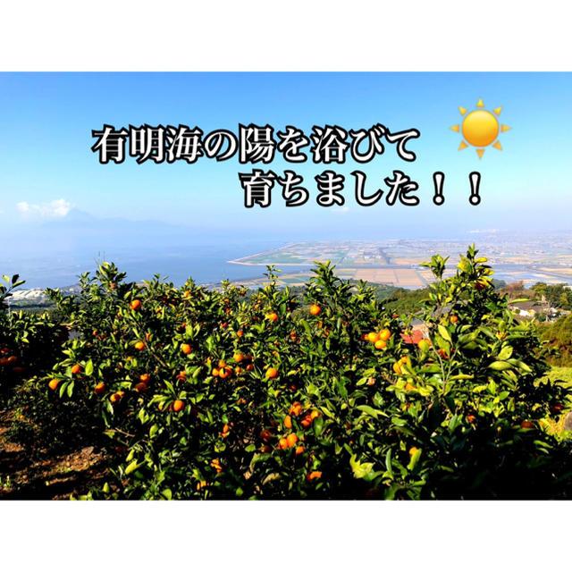 熊本県 河内みかん はちみつみかん☆農家直送☆ 食品/飲料/酒の食品(フルーツ)の商品写真